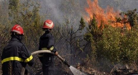 """السيطرة على حريق غابة """"عشاشة"""" بشفشاون"""
