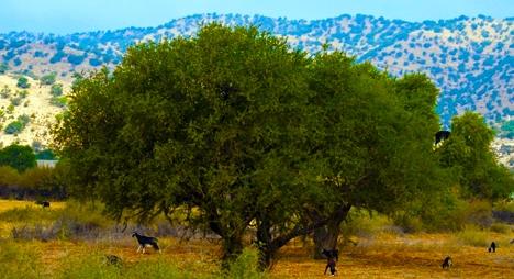 """روبورطاج : """"إداوكرض"""" ... إحدى كبرى قبائل """" إحاحان"""" : الساكنة ونمط العيش"""