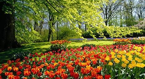 الحدائق العجيبة... توليفة طبيعية عجيبة
