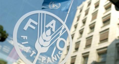 الفاو: ارتفاع أسعار المواد الغذائية عالميا للشهر العاشر على التوالى