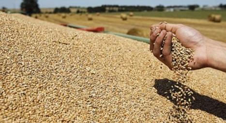 الحكومة تعلن اتخاذ تدابير تحفيزية لتسويق المنتوج الوطني من الحبوب