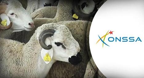 """""""أونسا"""": عيد الأضحى مر في ظروف جيدة على مستوى الصحة الحيوانية"""