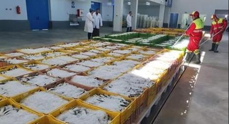 إحداث أكبر سوق للجملة لبيع السمك بانزكان