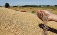 الحكومة تحدد السعر المرجعي للقمح عند التسليم...